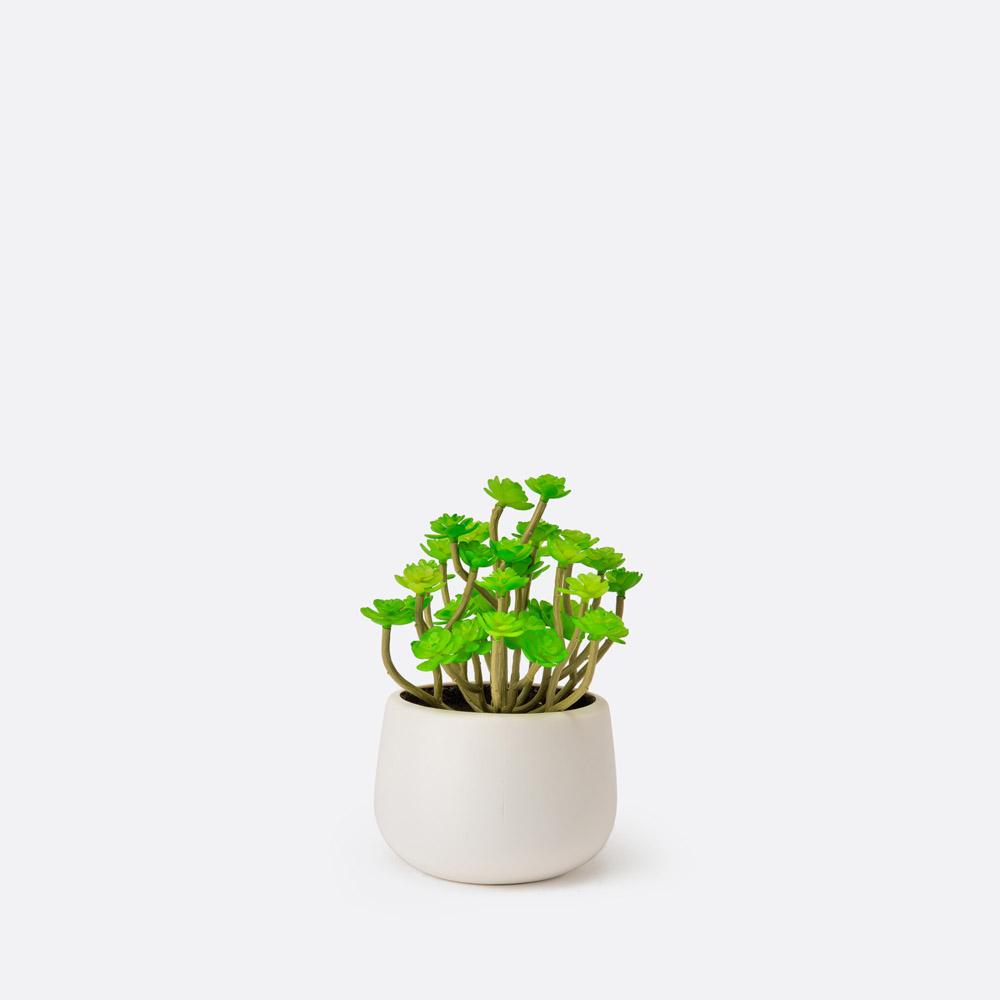 Planta artificial LOMA